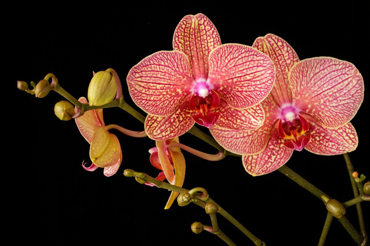 teksten-voor-trainers-paula-brummelkamp-blog-orchideeen-kweken