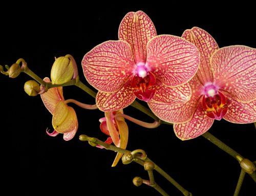 Ik wist het niet, maar een artikel schrijven is net orchideeën kweken